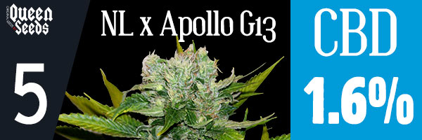 nl apollo g13 cbd cannabidiol