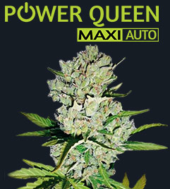 Power Queen Maxi Auto