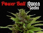 semilla de marihuana - power ball