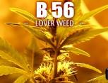 semilla de marihuana - b56