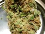 semilla de marihuana - bazooka