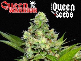 Queen Warrior