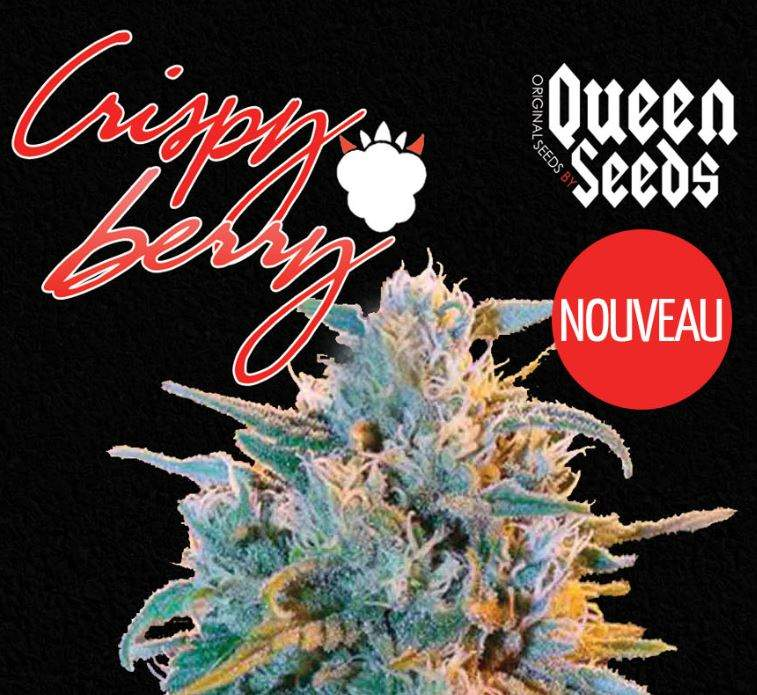 Crispy Berry